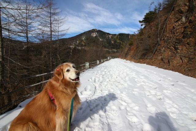 """「犬連れ登山」は是か非か """"犬お断り看板""""の実態を探る"""