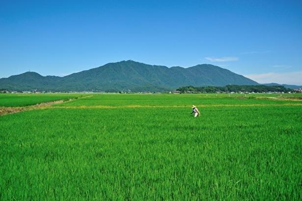 【コロナ対策情報付き】パワースポット彌彦神社