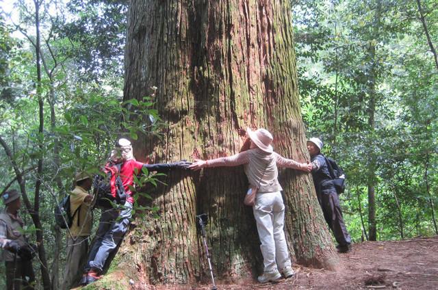 市房山|52本の杉が圧巻!自然豊かな二百名山のおすすめコース紹介