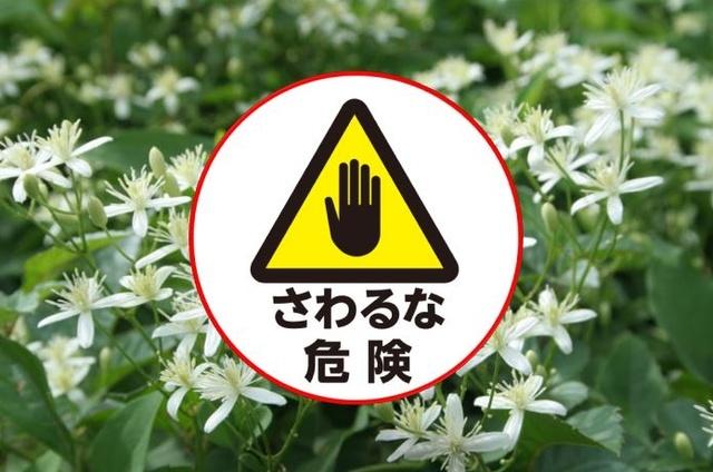 「触った」だけで◯◯!? 意外と知らない山のキケン植物図鑑