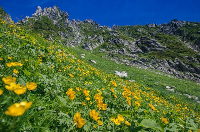 お花畑を見に行こう!初夏に行きたいおすすめの山特集