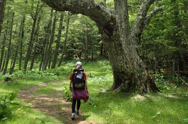 初心者から山好きまで楽しめる「美しい森」9選