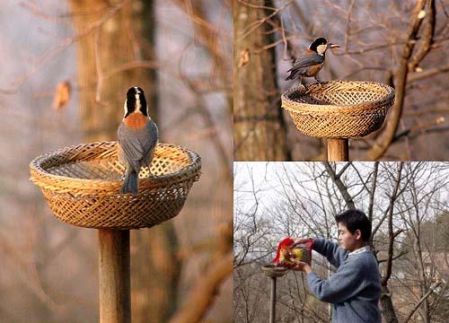 野鳥を庭に呼べるバードフィーダーの作り方とエサ …