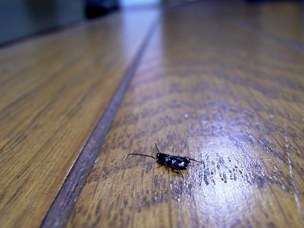 東京のゴキブリ , 海野和男のデジタル昆虫記 , 緑のgoo