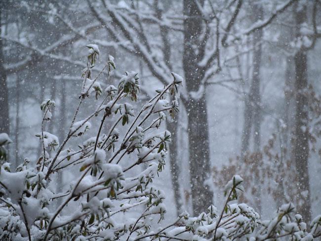 雪が降る - 海野和男のデジタル...